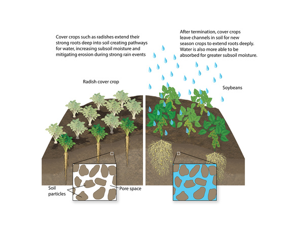 Soil Compaction Mitigation