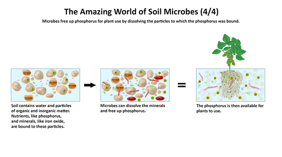 The Amazing World of Soil Microbes 4