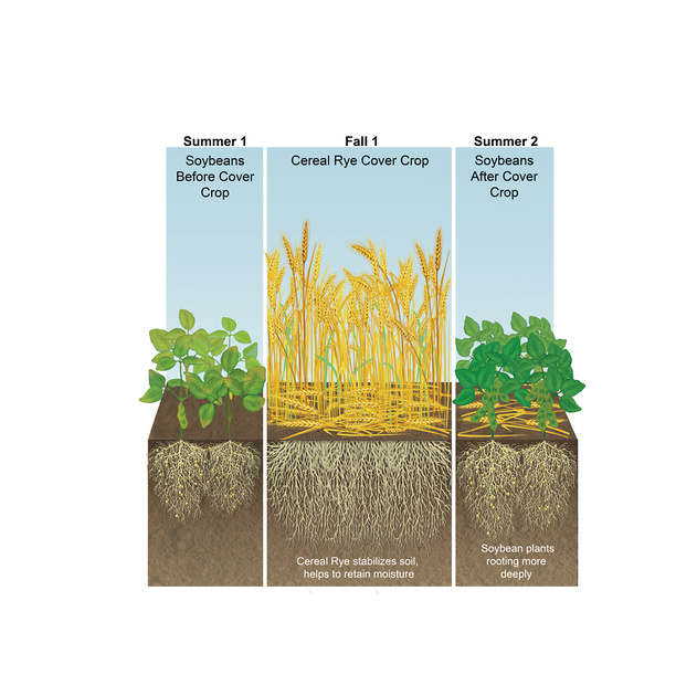 Zenfolio sare cover crop image library soil health for Soil library